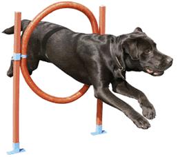 Výcvik a sport