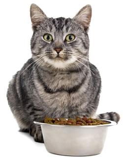 Krmivo pro kočky