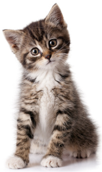 Kapsičky pro koťata