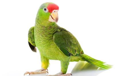 Pro papoušky