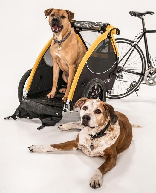 Se psem na kolo