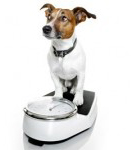 Granule pro starší psy nebo s nadváhou