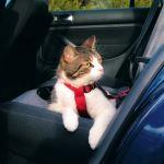 Bezpečnostní postroj pro kočku, Trixie