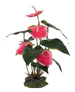 Lucky Reptile Anthurium - růžové cca 50cm