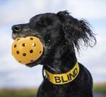 Děrovaný míč s rolničkou, pro zrakově postižené psy,  ø 7cm