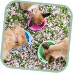 Miska pro psa, cestovní, BecoBowl Travel-pink M, EKO