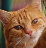 Proč kočky často dělají tak zvláštní věci?