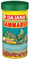 Dajana GAMMARUS zlatý