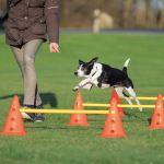 Trixie Dog Activity překážky (3ks) 23x30cm/78cm oranžová/žlutá
