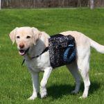 Ruksak na záda pro psa s motivem Trixie