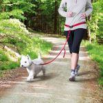 Pás na běh s vodítkem pro malé a střední psy Trixie