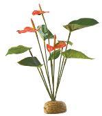 Rostlina EXO TERRA Anthurium Bush 30cm