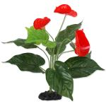 Rostlina REPTI PLANET  kvetoucí Anthurium 40cm