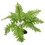 Rostlina REPTI PLANET kapradí Nephrolepis 20cm