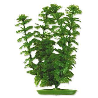 Rostlina MARINA Ambulia 20cm
