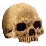 Dekorace EXO TERRA lidská lebka 15x11,5x10,5cm